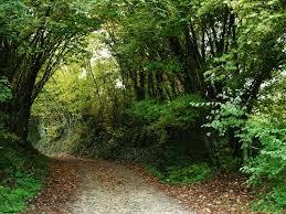image forêt carmel de Blois